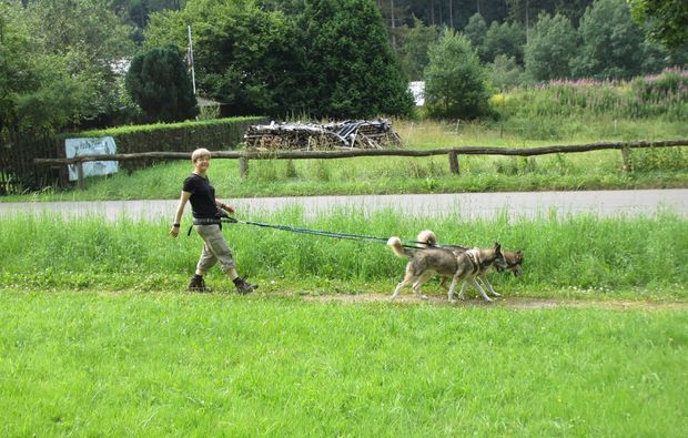 husky-trekking-schmallenberg-hobby