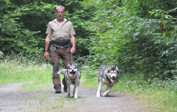 husky-trekking-schmallenberg-natur
