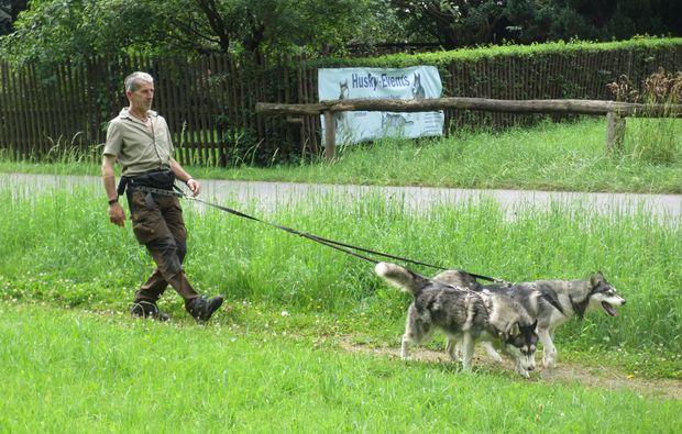 husky-trekking-schmallenberg-spazieren