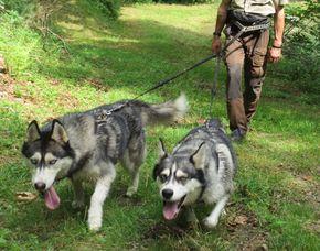 Husky-Trekking Ca. 3 Stunden