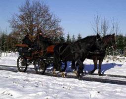1-romantische-kutsch-fahrt1354198319