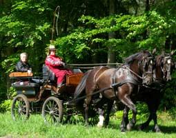 6-kutsche-fahren