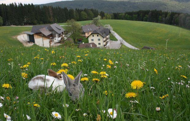 zauberhafte-unterkuenfte-fischbach-aussicht