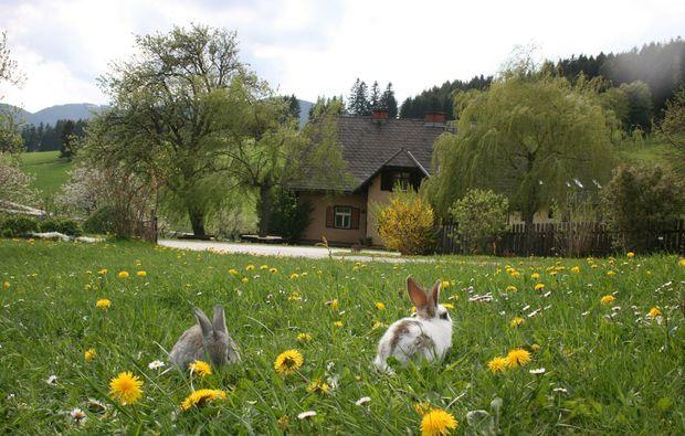 zauberhafte-unterkuenfte-fischbach-sommer