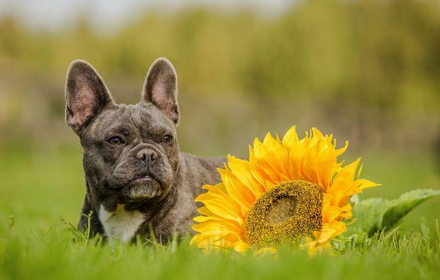 animalisches-fotoshooting-grafenau-bsonnenblume