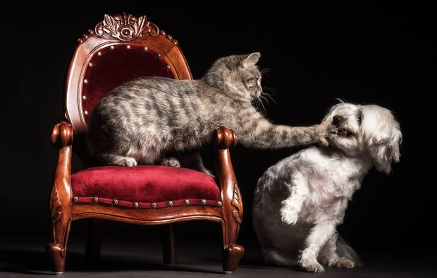 animalisches-fotoshooting-grafenau-hund-und-katze