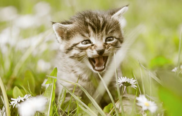 animalisches-fotoshooting-grafenau-katzenbaby