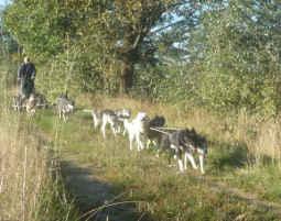husky-racing