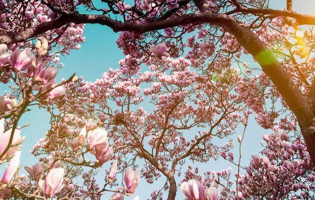 fototour-stuttgart-magnolienbaum