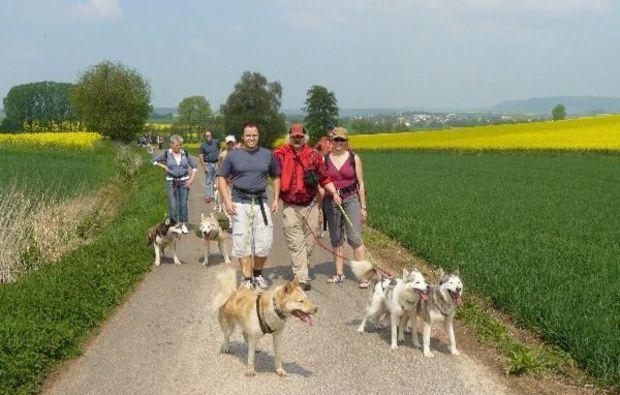 sommer-husky-trekking-neuhof-hauswurz