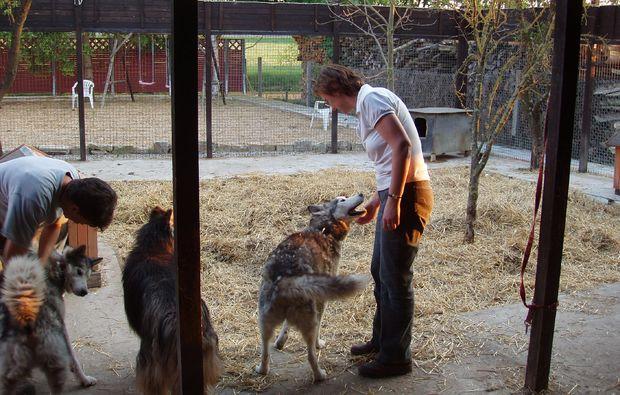 schlittenhundefahrt-markt-bibart-love