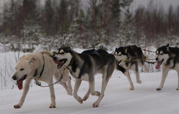 schlittenhundefahrt-markt-bibart