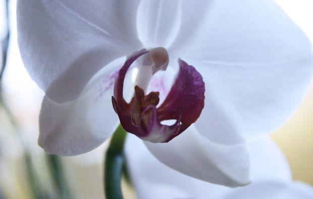 shiatsu-massage-garching-flower