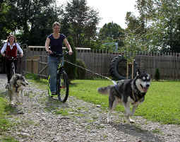 Dogscooter Schwabmünchen 1-2 Stunden