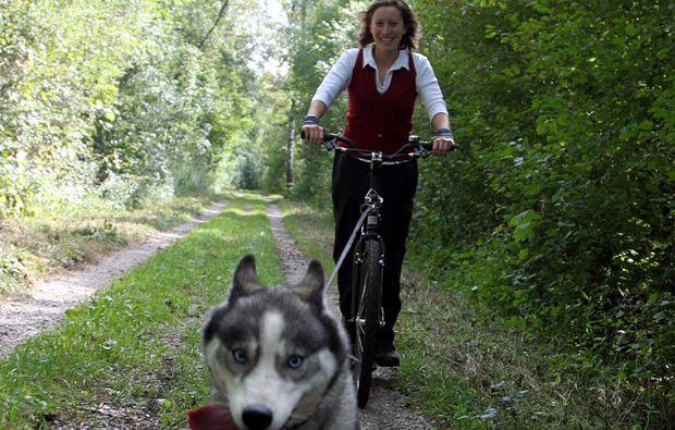 dogscooter-schwabmuenchen-drausen