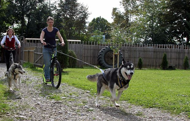 dogscooter-schwabmuenchen