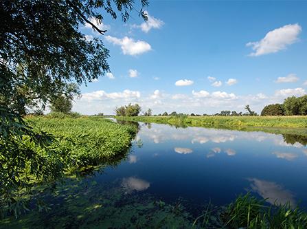 Havel Ufer im Sommer