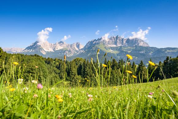 Wiese und Berge in Kitzbühel im Sommer