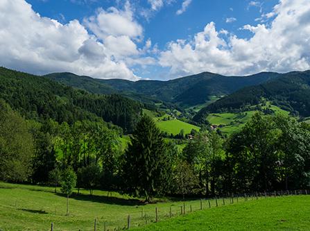 Grüne Hügellandschaft im Schwarzwald