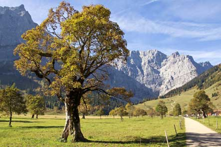 Grosser Ahornboden in Karwandel